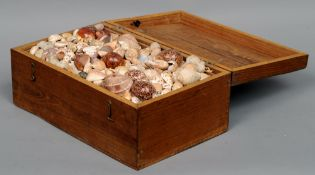 A collection of various shells  Housed in a triple tray box.  40.5 cms wide.    CONDITION