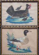 """Reserve: 50 EUR        Paar Federbilder (19.Jh.) jeweils hinter Glas gerahmt; """"Die Henne mit"""