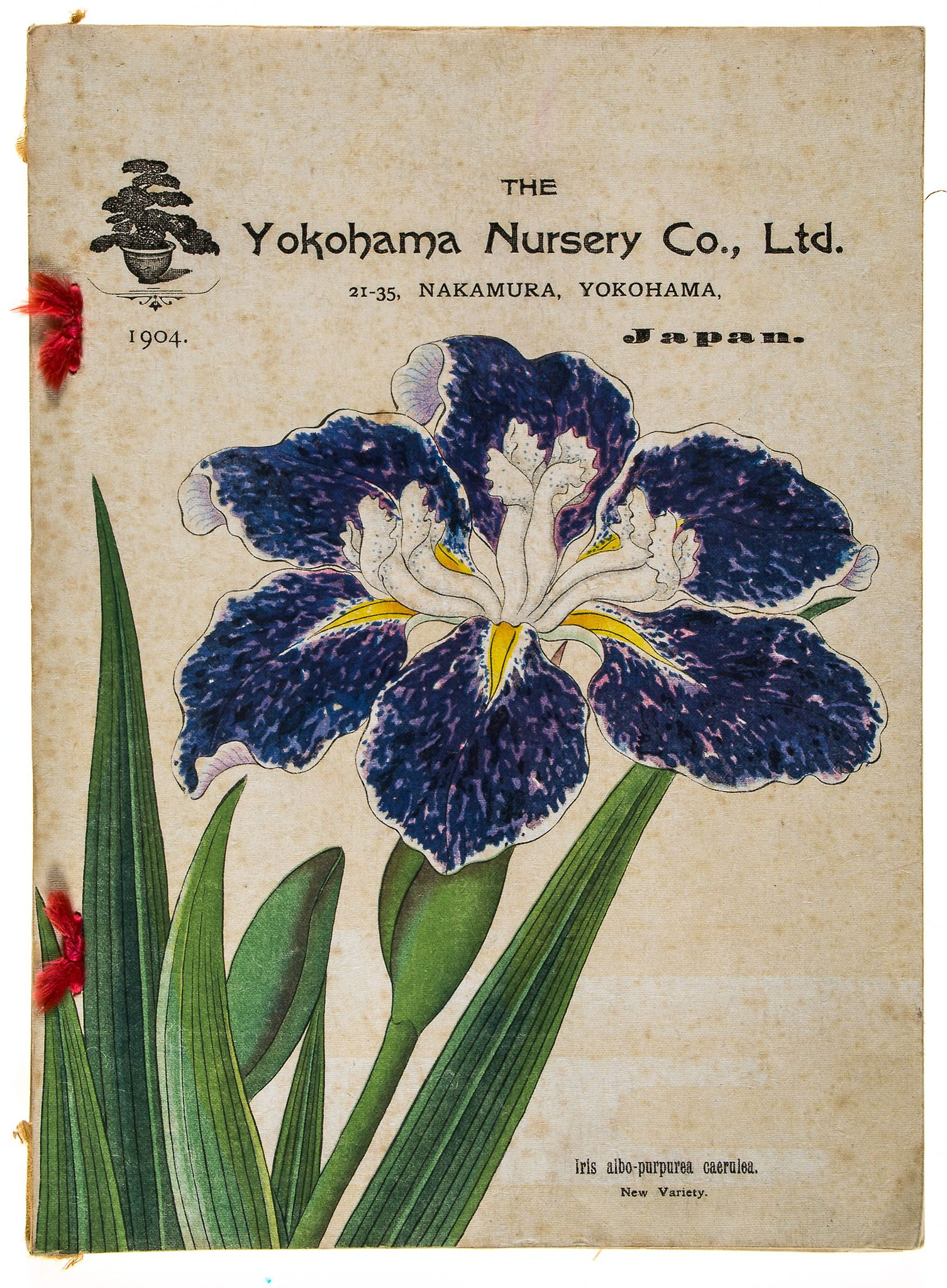Yokohama Nursery Co., Ltd. - Descriptive Catalogue...for 1904,  illustrations including 11 full-page