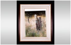 Pencil Signed Print By Steven Townsend Of A Barn Owl Resting On a Post, Framed & glazed. 24x28''