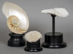 A Nautilus shell section and two round coral specimens Each mounted on display stands.  The shell