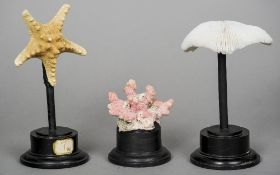 Two coral specimens and a star fish Each mounted on a display stand. CONDITION REPORTS: Some general