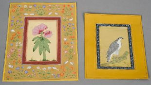 Two 19th century Indian watercolours One depicting a hawk on a branch, the other a flowering bloom