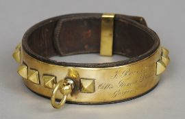A 19th century French brass and leather dog collar Of typical form with raised studs and with