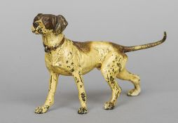 An Austrian cold painted bronze figure of a hound Modelled in alert pose.  12.5 cm high. CONDITION