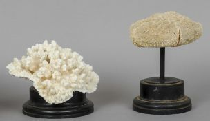A coral specimen Mounted on an ebonised display plinth; together with another marine specimen,