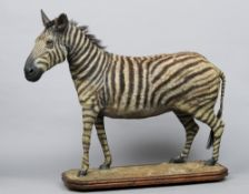 An early 20th century taxidermy plains zebra (equus quagga) Mounted on a plinth base with