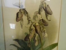 After Henry G. Moon (1857-1905), Orchids, a pair of aquatints, framed. 44cm by 32cm