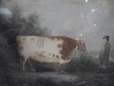 After John Boultbee, The Durham Ox, aquatint, early 19th century, engraved by Whessell, framed. 50cm