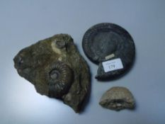 A group of fossils comprising ammonite hildoceras bifrons (Whitby), ammonite asteroceras stellare (