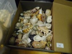 A collection of small shells, conch, clam etc