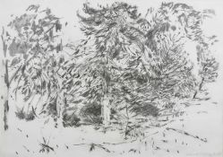 Sarah Medway (20th century) British Hampstead Heath, a pencil sketch of trees, signed and dated 12.