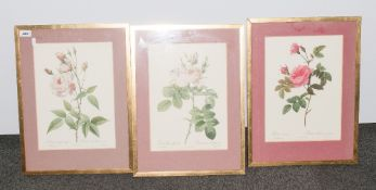 P.J .Redoute Set of Three Coloured Prints of Roses. Lemaire Sculpt. Frame and Glazed. 26 x 18
