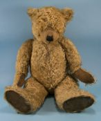 Early And Large Alpha Teddy Bear, Made b
