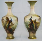 Royal Worcester Pair of Fine Hand Painted Vases 'Peacocks and Peahens in a Woodland Setting', signed