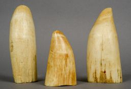 Three uncarved whales teeth Of typical form.  The largest 17 cm long.