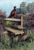 KEN TURNER (20th/21st century) British Cock and Hen Pheasants Oil on board Signed 44 x 64.