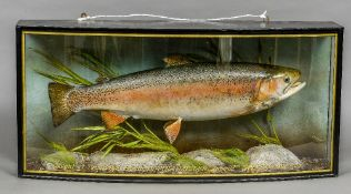 A taxidermy specimen of a preserved Trout (Oncorhynchus mykiss) Set in a naturalistic setting,