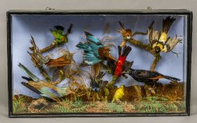 A taxidermy specimen of a collection of preserved exotic birds including Rollers,