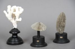 Three coral specimens Each mounted on an ebonised display stand. The largest 17.5 cm high.