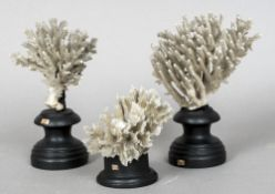 Three various coral specimens Each mounted on an ebonised display plinth. The largest 20 cm high.