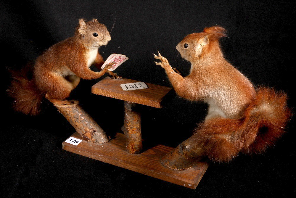 Colin Scott taxidermy model of two squirrels playing cards, 30cm. CONDITION REPORT: Squirrel with