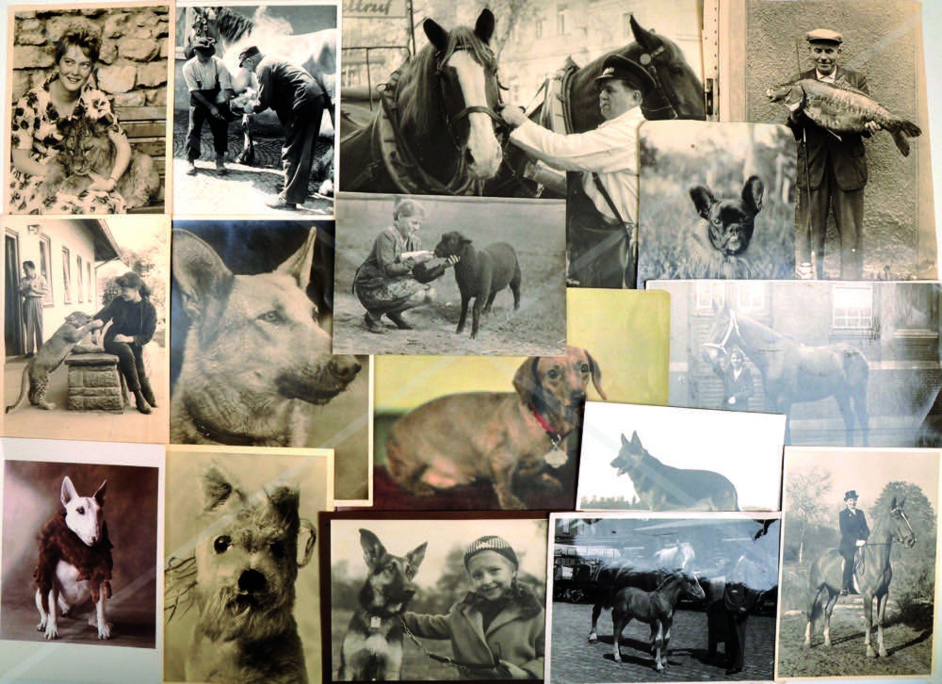 SAMMLUNG MENSCH UND TIER, ca. 160 Fotos, Hunde, Katzen, Sittiche, Pferde, geangelter Riesenkarpfen - Bild 2 aus 2