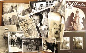 SAMMLUNG MENSCH UND TIER, ca. 160 Fotos, Hunde, Katzen, Sittiche, Pferde, geangelter Riesenkarpfen