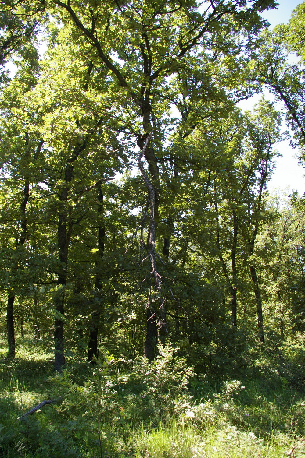 8 001 Sqm Oak Forest Plot Located In Bela Rada Vidin