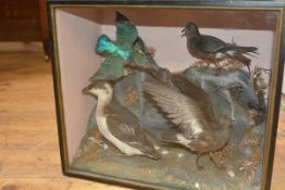 A 19th century taxidermy group of four birds including a kingfisher, arranged in a naturalistic