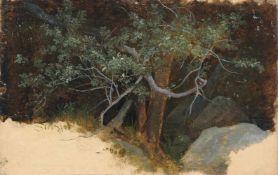 """Franz Albert Venus (zugeschr.) """"Baumstudie"""". Wohl um 1860. Öl über Blei auf grundiertem Papier,"""