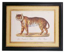 Brodtmann's Naturhistorische Bilder-Gallerieaus dem Thierreiche' Der Bengalische Tieger Felis