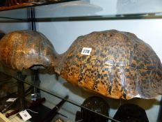TWO ANTIQUE AFRICAN TORTOISE CARAPACE, THE LARGEST APPROX 40CMS.