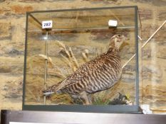 A TAXIDERMY MOUNT HEATH HEN IN NATURALISTIC SETTING AND FULL GLAZED CASE.
