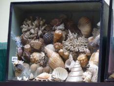 AN EARLY VICTORIAN CONCHOLOSIST'S DIORAMA FILLED WITH A COLLECTION OF SEASHELLS, CORALS AND SEA