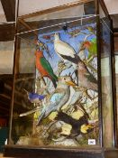A FINE VICTORIAN CASED AND MOUNTED COLLECTION OF AUSTRALIAN BIRDS BY JAMES GARDNER OF LONDON TO