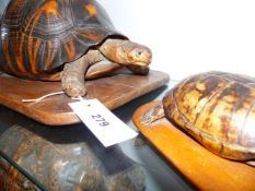 A GROUP OF THREE LATE 19TH/EARLY 20TH.C.FULL MOUNT TORTOISE, TWO MOUNTED ON WOODEN BASES.