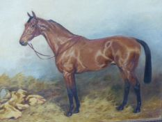 IVESTER LLOYD (1871-1942) A PORTRAIT OF A HORSE, A SIGNED OIL ON CANVAS. 41x51cms