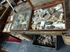 A LARGE COLLECTION OF VARIOUS ROCKS, FOSSILS, MINERALS,ETC.