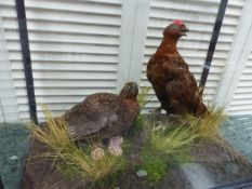 A PAIR OF TAXIDERMY GROUSE.