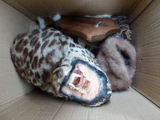 VARIOUS TAXIDERMY COLLECTABLES, ETC.