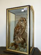 A VICTORIAN TAXIDERMY CASED TAWNY OWL.