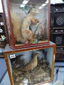 AN ANTIQUE TAXIDERMY RED SQUIRREL IN GLAZED CASE AND A CASED TAXIDERMY BIRD.