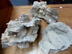 THREE LARGE FLAT CORAL SPECIMENS.