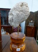 AN ANTIQUE BRAIN CORAL SPECIMEN TOGETHER WITH A FURTHER CORAL MOUNTED ON RETORT STAND.