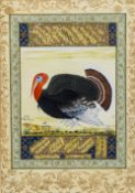 An Indo-Persian miniature painting of a turkey Within calligraphic text and further signed and
