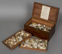 A snail shell collection Housed in a hinged mahogany collectors box,