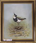 PETER WELCH, Lapwing,