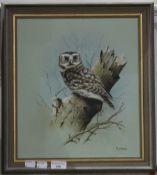 PETER WELCH, Little Owl,