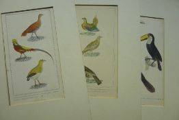 A quantity of ornithological and other prints